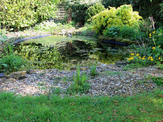 How To Create Your Own Garden Pond Pond Habitats