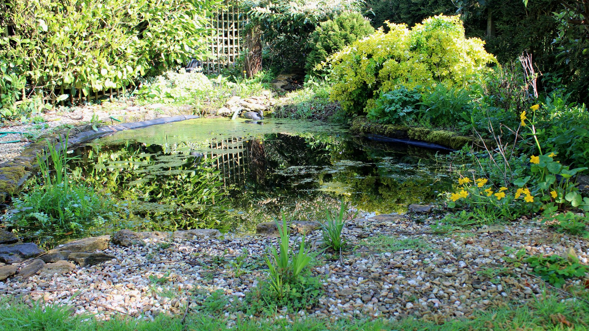 8 steps to creating your own garden pond
