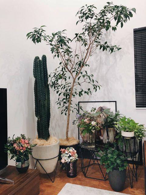 Flowerpot, Houseplant, Cactus, Flower, Plant, Room, Botany, Tree, Interior design, Succulent plant,