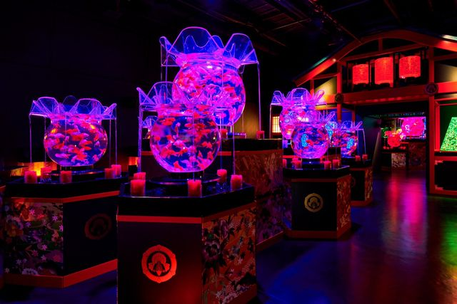 Purple, Magenta, Neon, Electricity, Visual effect lighting, Games, Decoration, Electronic signage,