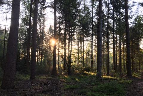 hardlopen door het bos zon door de bomen