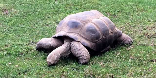 tortoise at oakland zoo