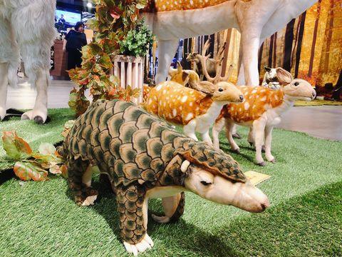 Dinosaur, Terrestrial animal, Animal figure, Triceratops, Grass, Wildlife, Lawn ornament, Fawn,
