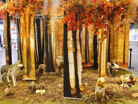Tree, Autumn, Deciduous, Canidae, Leaf, Dog, Woody plant, Biome, Woodland, Plant,