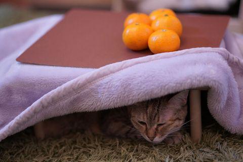 買橘子送「貓用暖爐桌」?