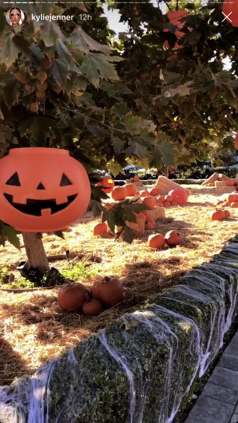 Pumpkin, Leaf, Tree, Plant, Jack-o'-lantern, Autumn,