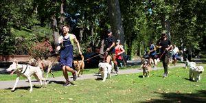LA Dog Jogger