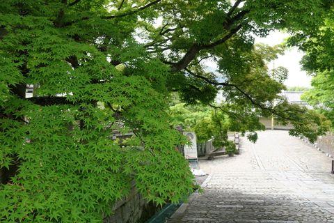 京都 金戒光明寺
