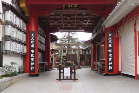京都・市比賣神社 重陽の節句 菊の被せ綿