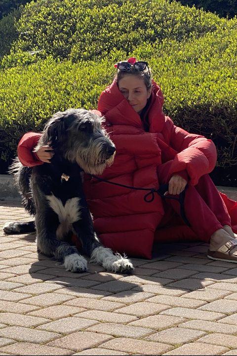 Dog, Canidae, Dog breed, Sitting, Sporting Group, Carnivore, Companion dog, Plant, Petit basset griffon vendéen, Tibetan terrier,