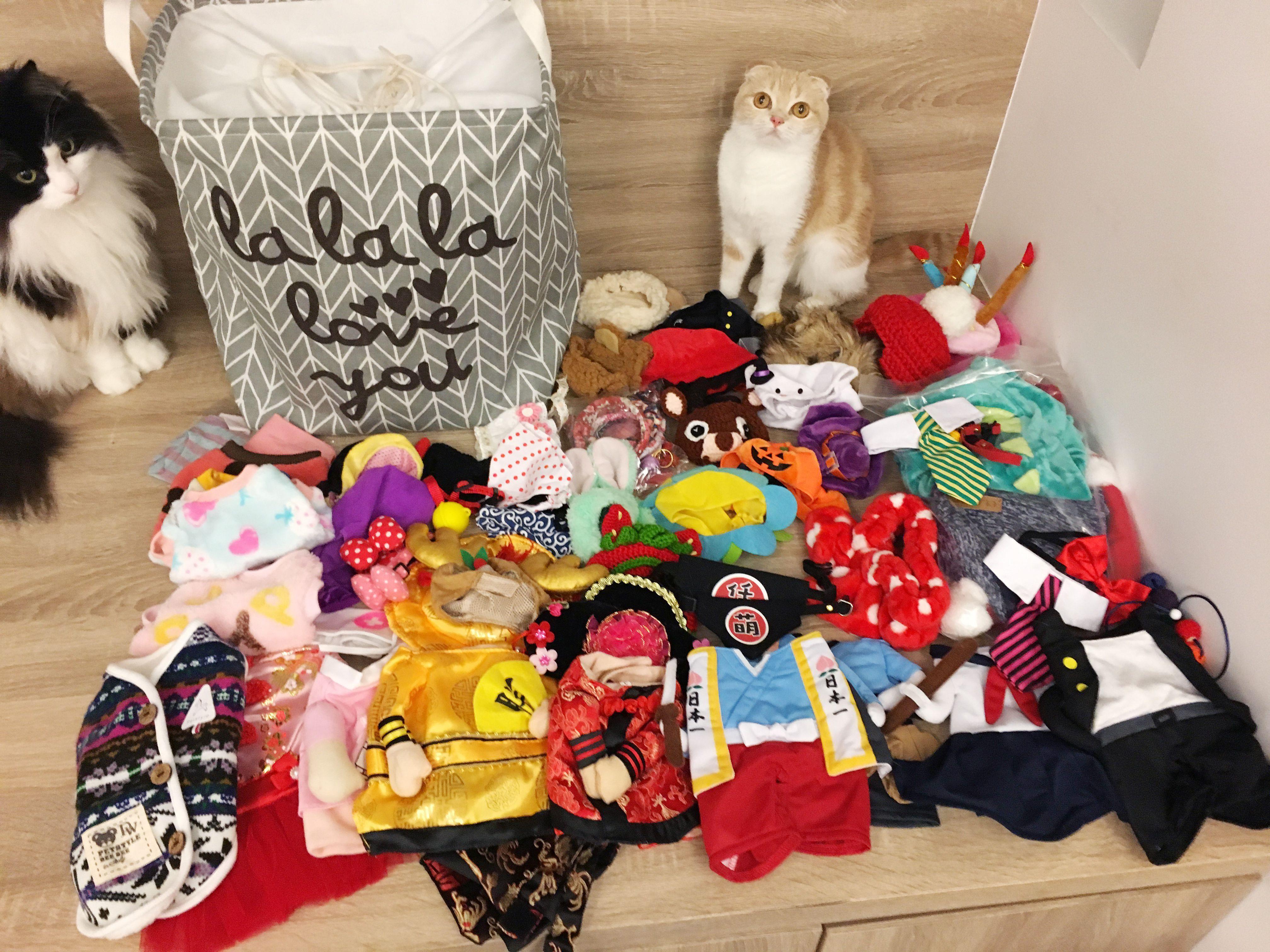 拉查花,毛小孩,裝扮,穿搭,寵物,站立裝,衣櫥