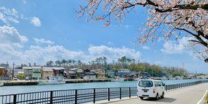 日本金澤櫻花之旅