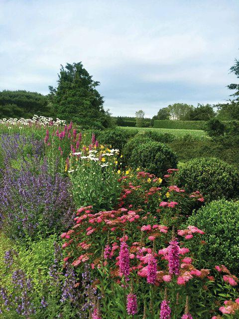 Flower, Flowering plant, Garden, Plant, Botanical garden, Shrub, Meadow, Botany, Spring, Grass family,
