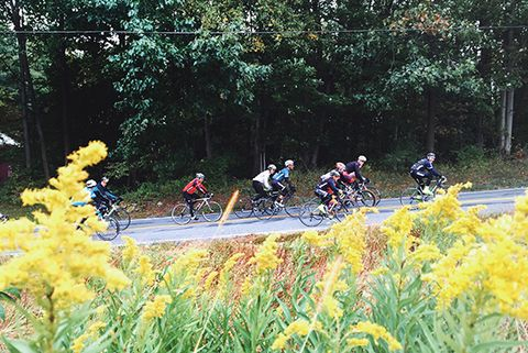 Bicycling Fall Classic cyclists ride goldenrods in the Lehigh Valley.