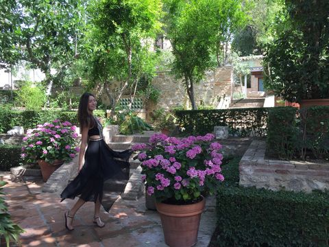 Flower, Plant, Garden, Botany, Shrub, Tree, Spring, Flowerpot, Landscaping, Backyard,