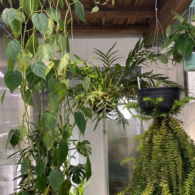 Plant, Flower, Houseplant, Botany, Flowerpot, Tree, Room, Flowering plant, House, Vascular plant,