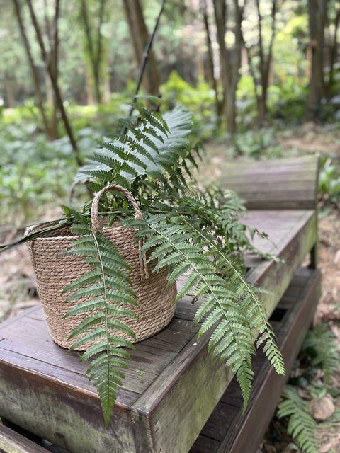 台中新社薰衣草森林
