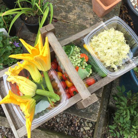 Vegetables in a basket outside