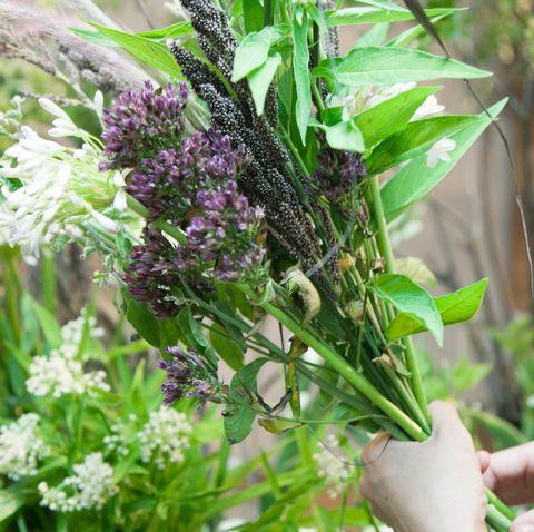 Flower, Plant, Flowering plant, Herb, buddleia,