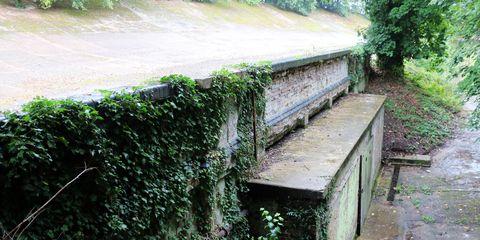 Green, Vegetation, Water, Tree, Grass, Leaf, Botany, Wall, Waterway, Watercourse,