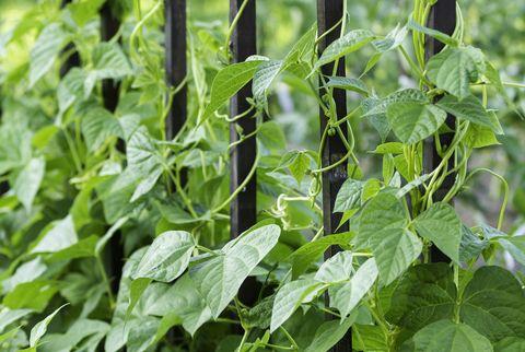 plantes dans un jardin