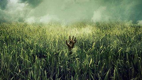 In the tall grass netflix pelicula