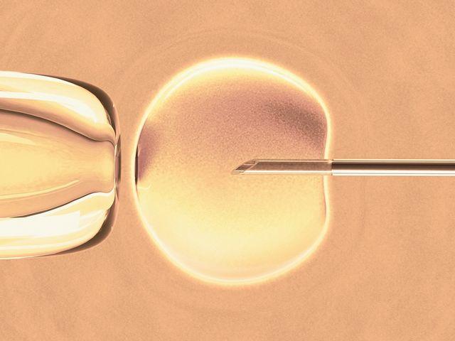 in vitro fertilisation, artwork