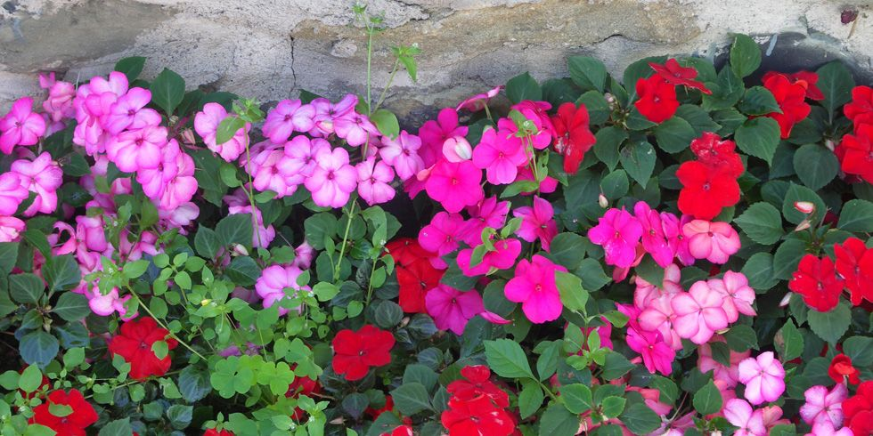 15 Best Shade Loving Plants Flowers