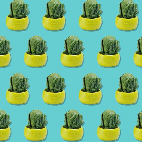 Cactus, Yellow, Plant, Saguaro, Houseplant, Terrestrial plant, Flower, Flowerpot, Hedgehog cactus, Succulent plant,