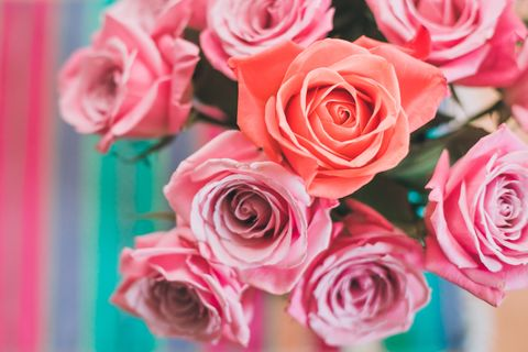 individuality concept pink roses in a vase