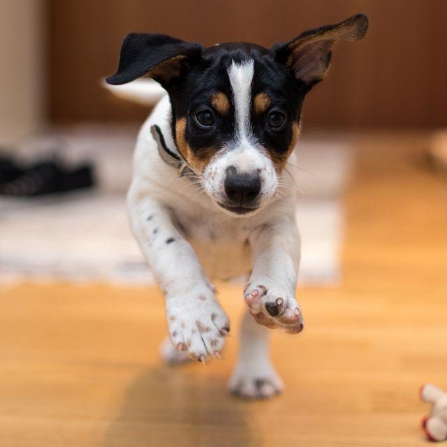 indoor-dog-activities