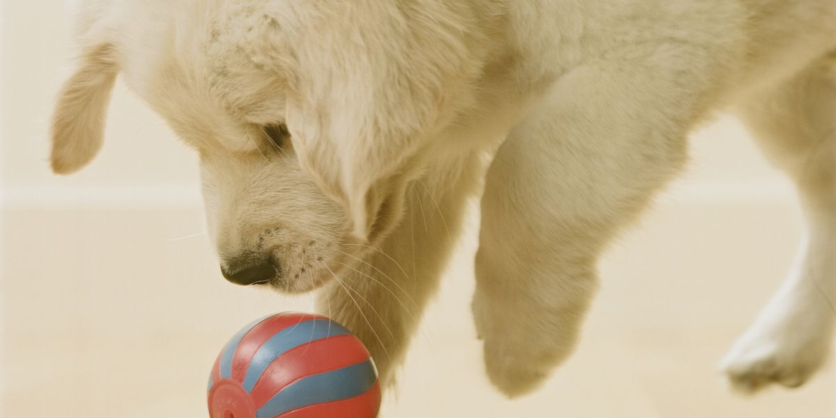 15 Indoor Dog Games To Help Your Pup Run Off His Energy