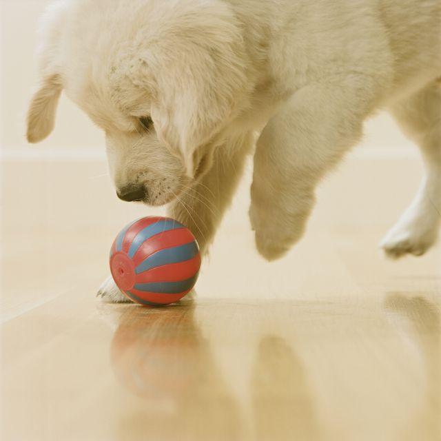 indoor dog namesfetch