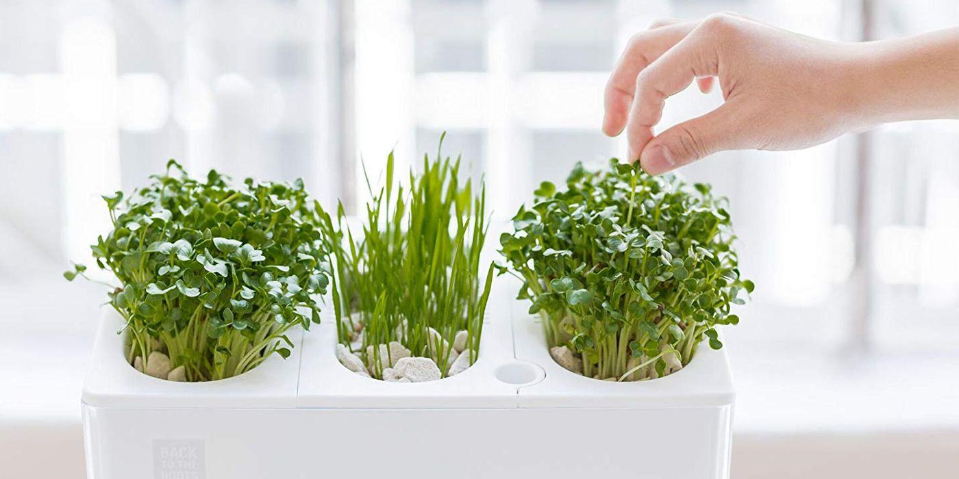 9 Indoor Herb Gardens for the Freshest Salads Year-Round