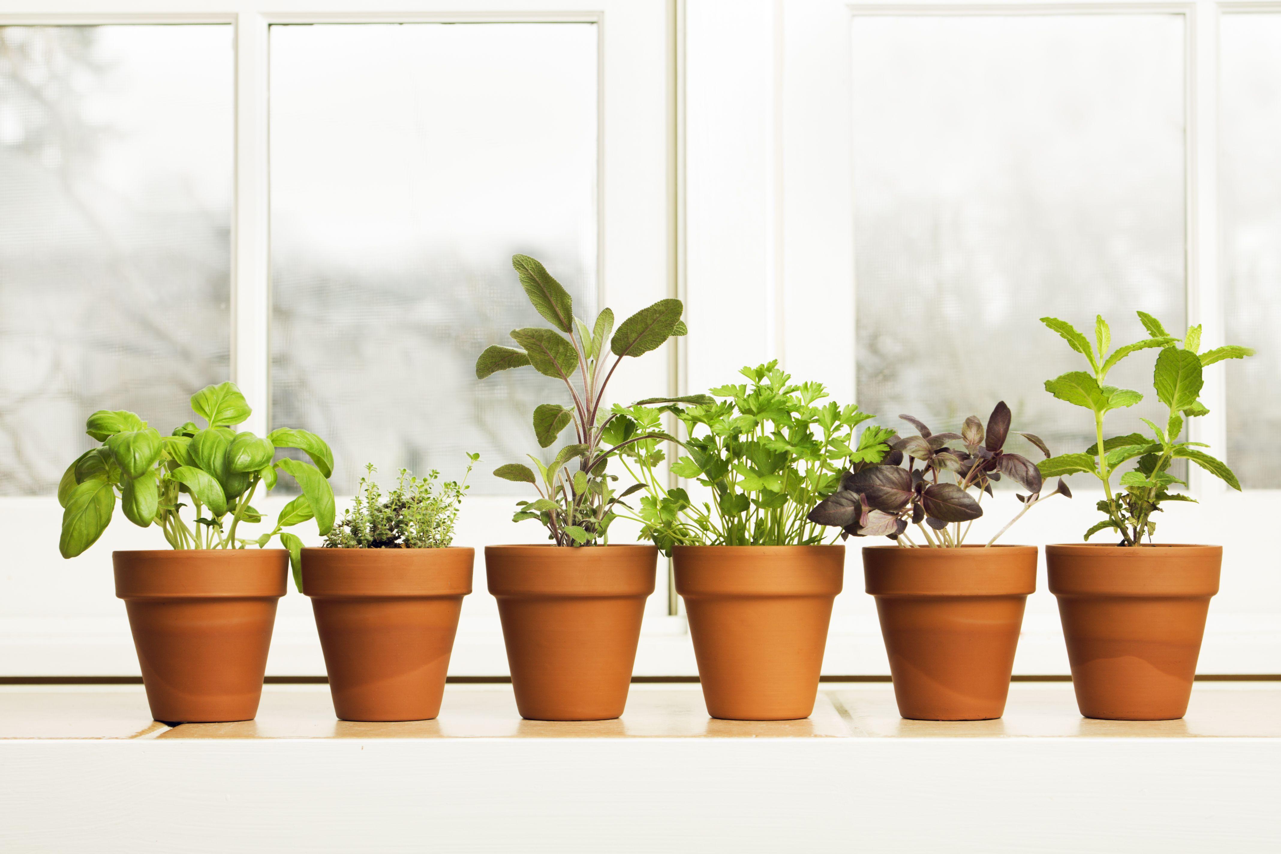 How To Grow An Indoor Herb Garden Indoor Gardening Tips
