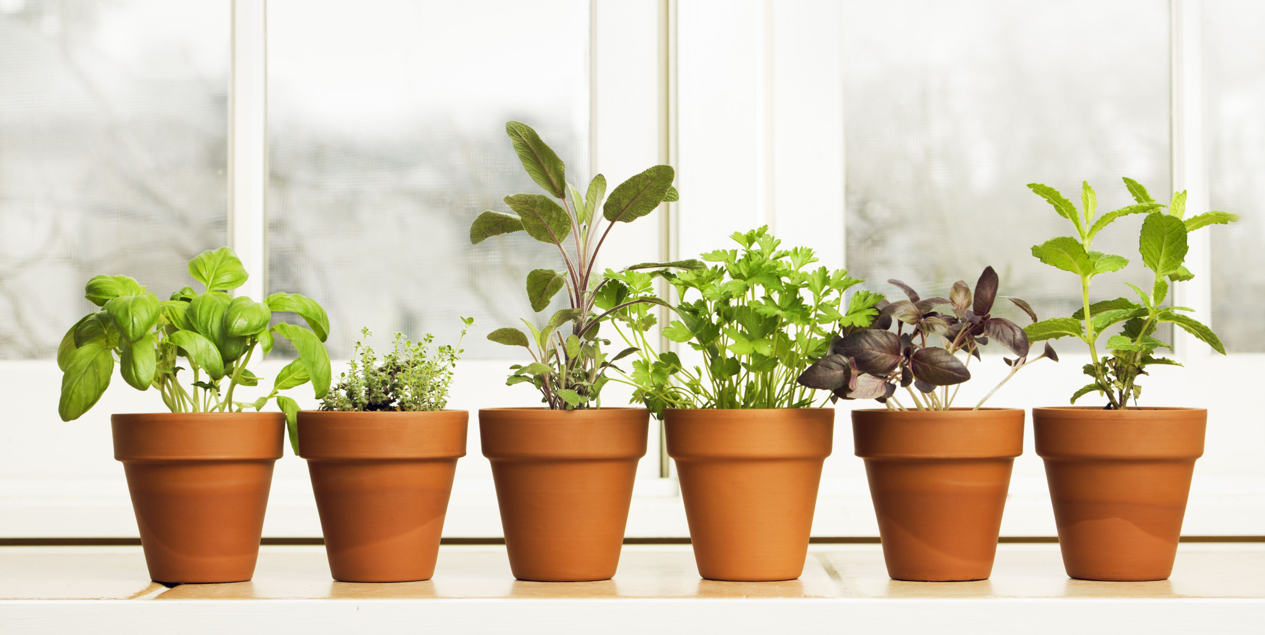 How to Grow an Indoor Herb Garden That Actually Stays Alive All Winter