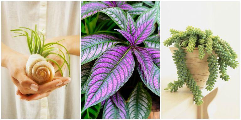 17 Best Indoor Plants - Easy Indoor Gardening Ideas