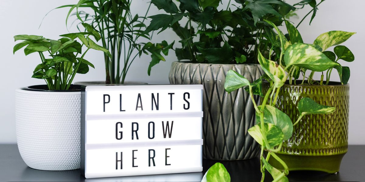 11 Best Indoor Plants For Your House To In 2018