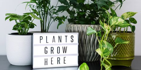 Best Indoor Plants To Online