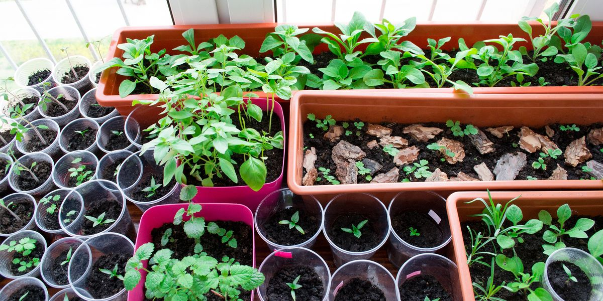 indoor vegetable garden ideas how to grow vegetables indoors. Black Bedroom Furniture Sets. Home Design Ideas