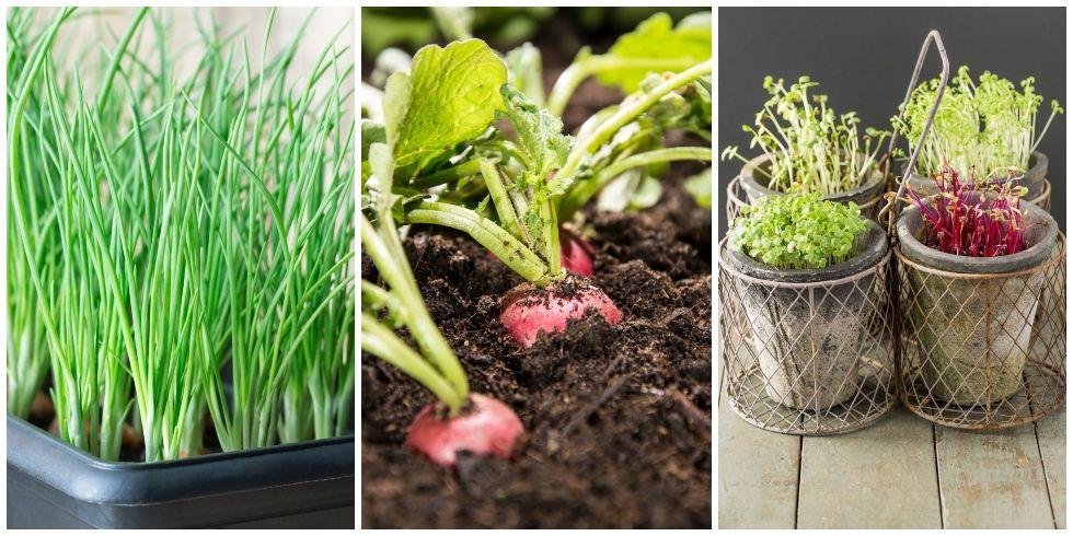 Indoor Vegetable Garden Ideas - How to Grow Vegetables Indoors