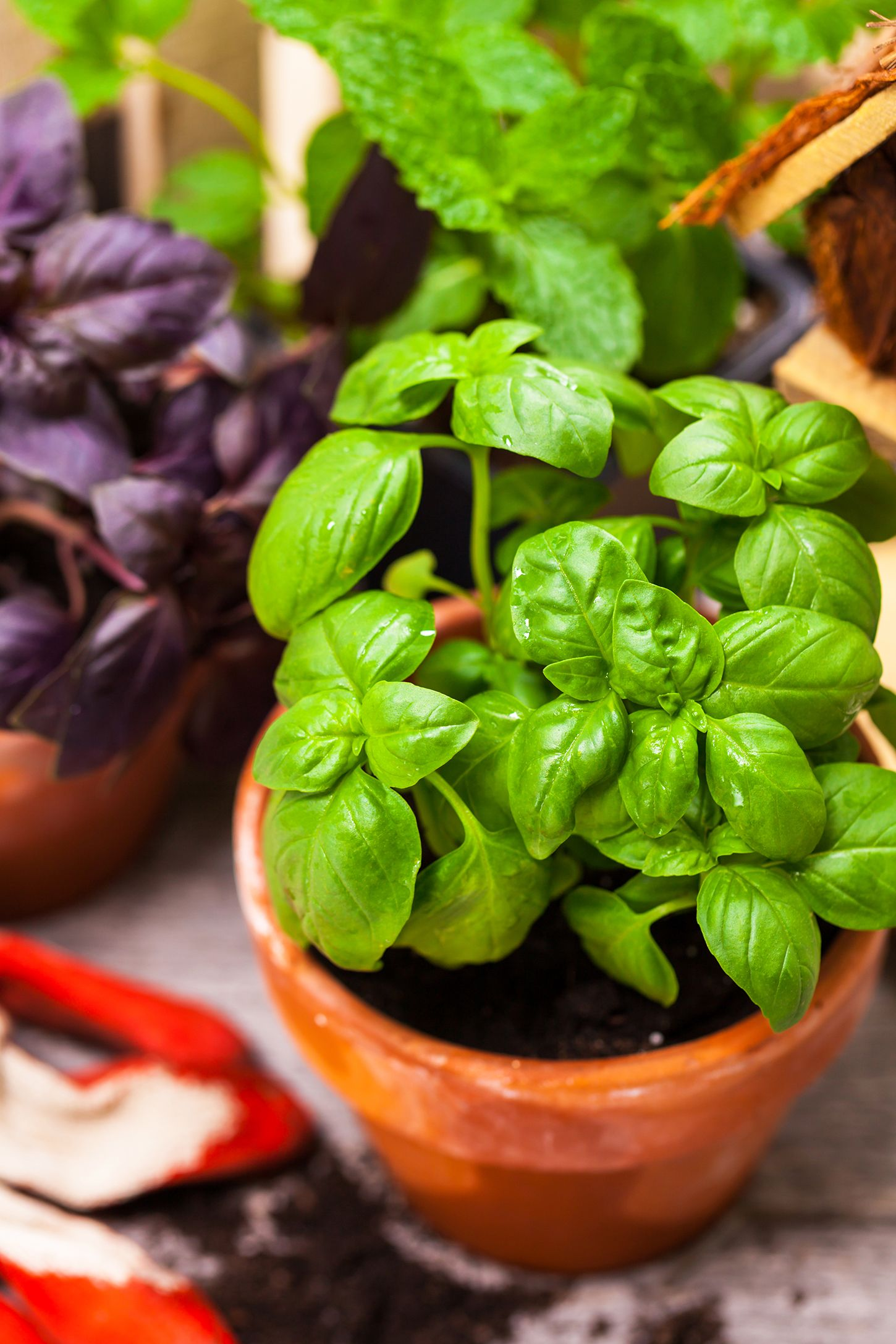 Beautiful and useful: how to grow greens at home all year round