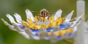 Insectology Feed for Buzz, de Matilde Boelhouwer