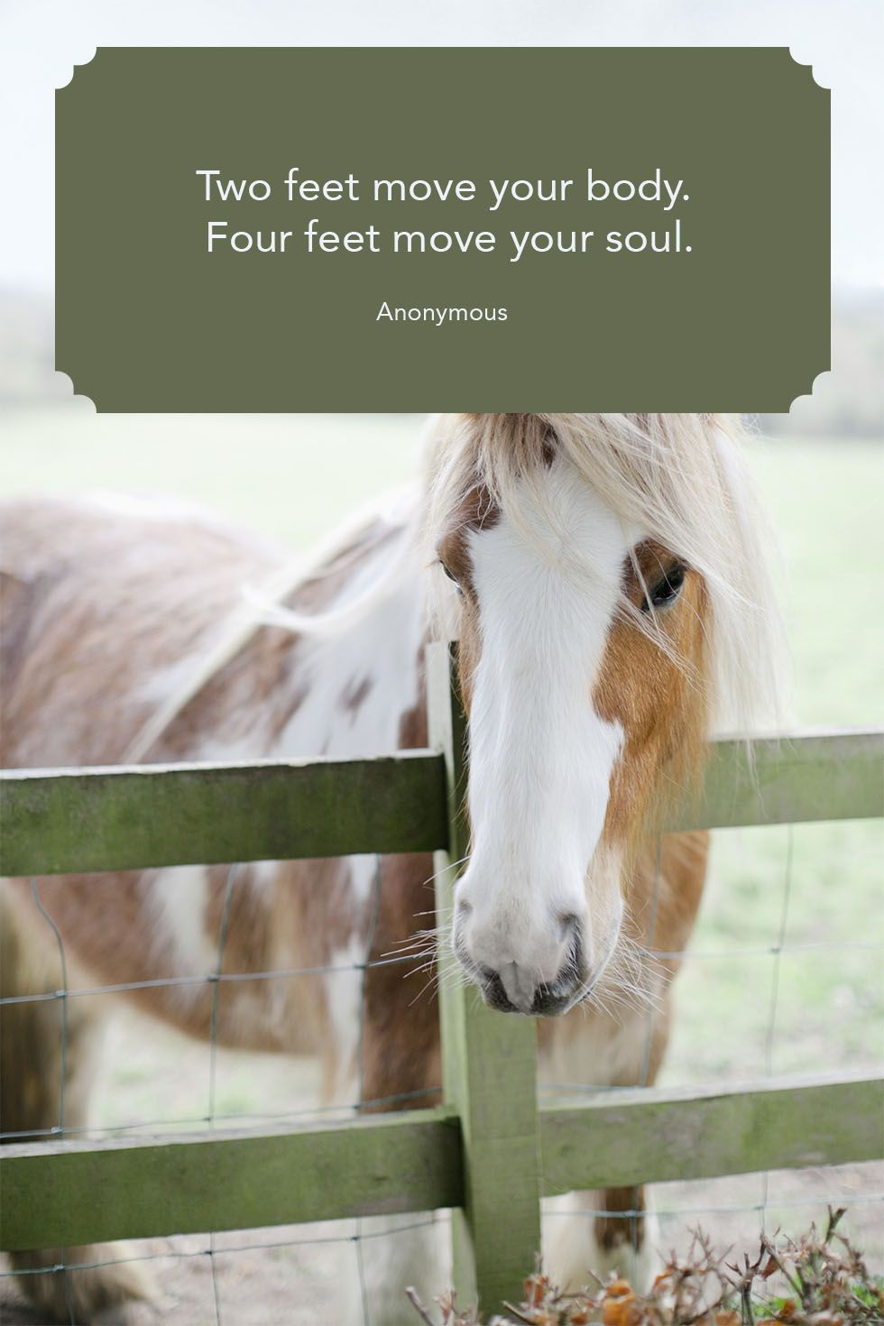 16 Inspirational Quotes Horses Swan Quote