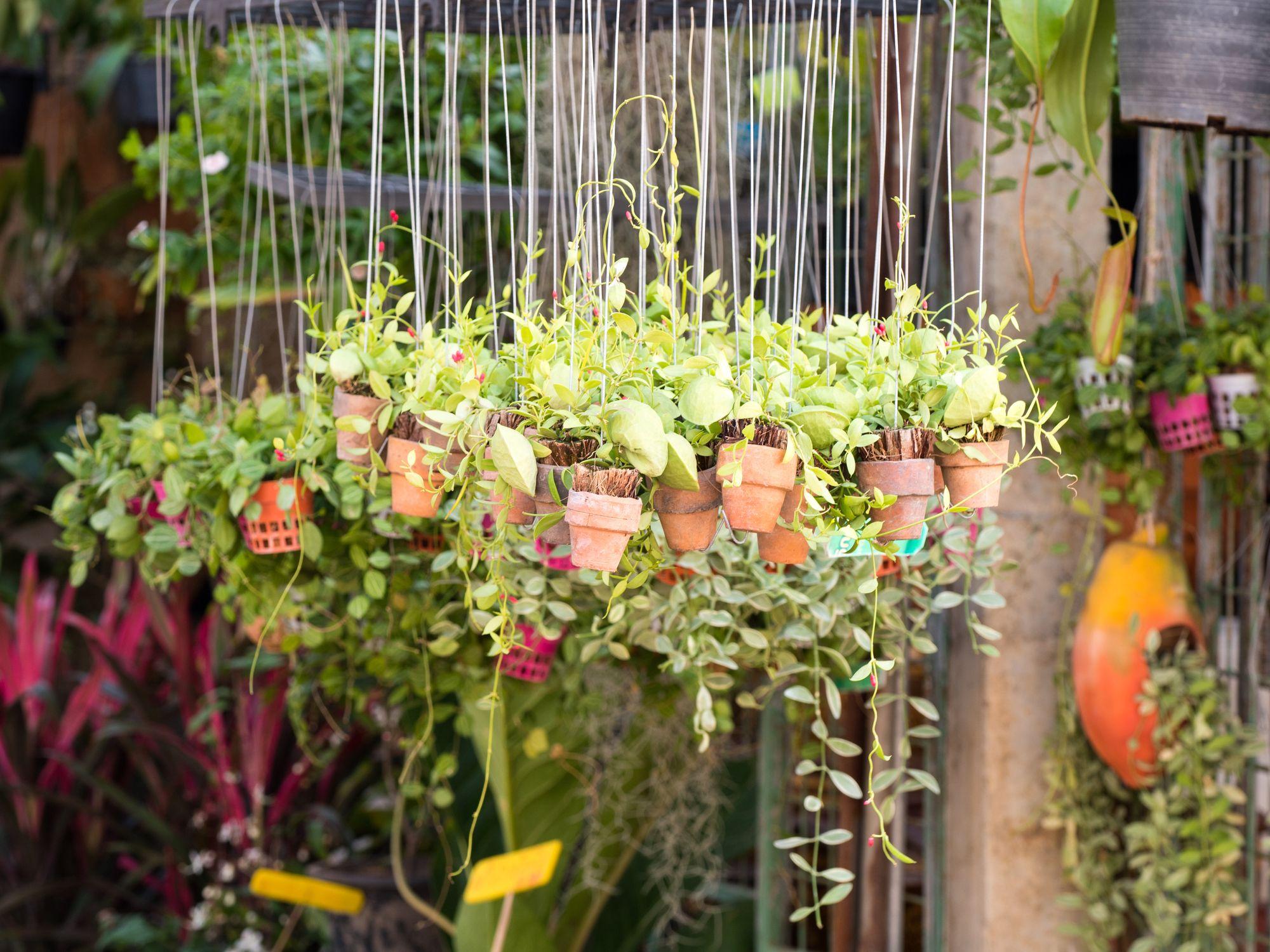 Hanging plant pots - Insta gardening - Argos garden trends 2018