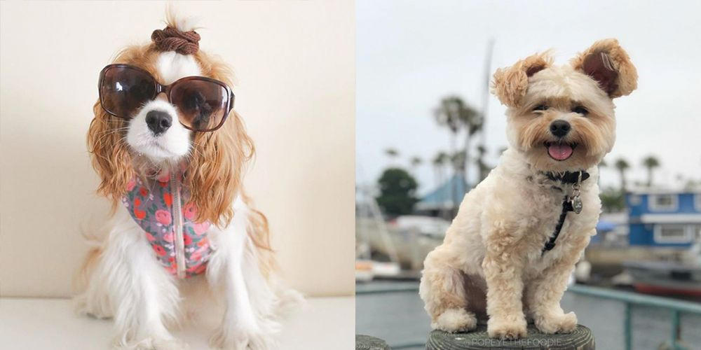 10 Instagram Famous Dogs To Follow Right Now