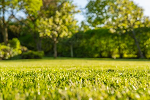Interesting, ground level view of a shallow focus image of recently cut grass seen in a large, well-kept garden in summer.