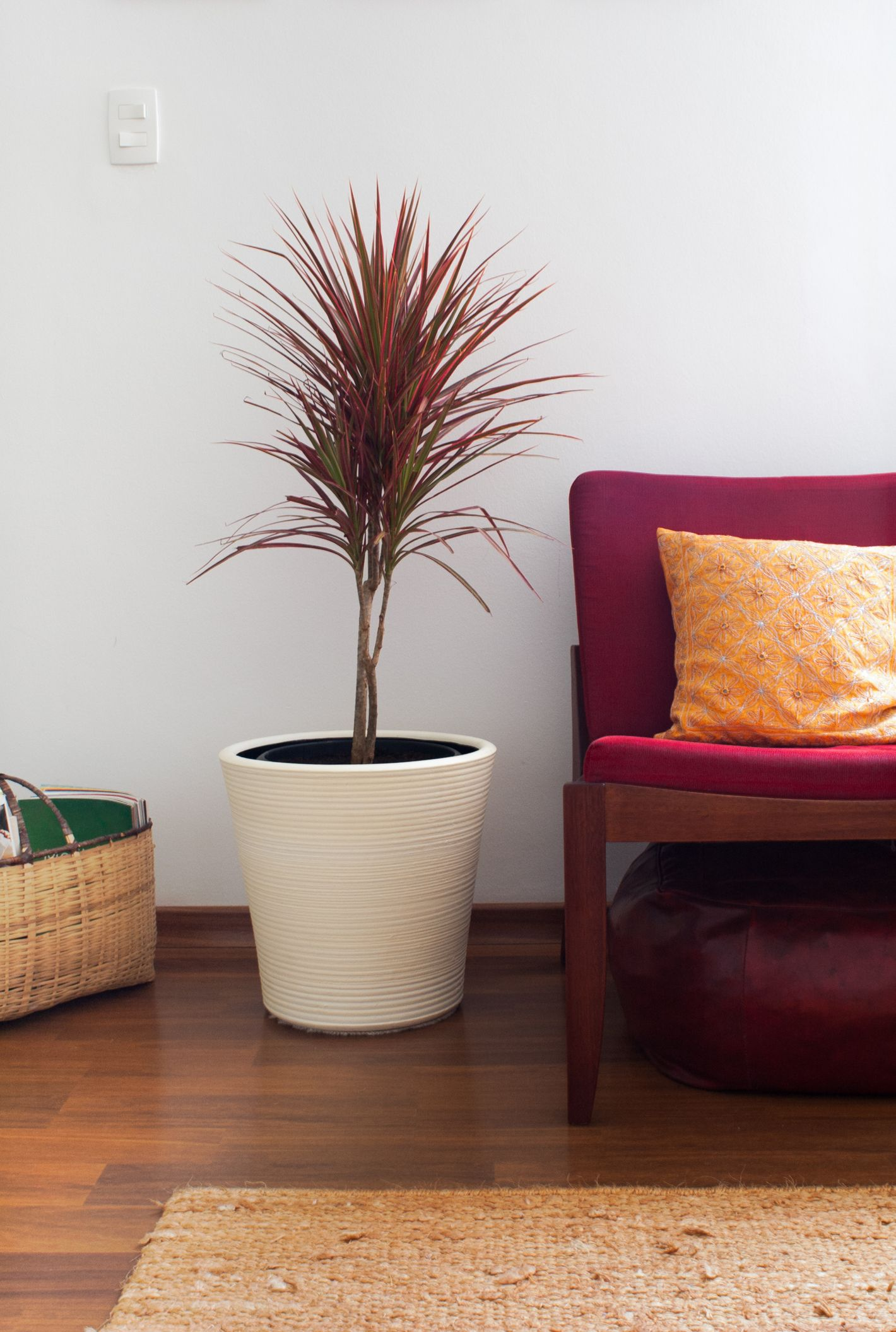 Dracaena Plants Are the New Fiddle Leaf Figs Trees, But They're so Much Easier to Keep Alive