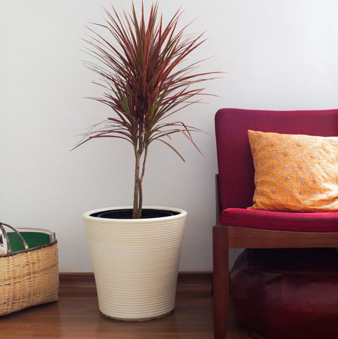 Interior close-up of living room with chair, plant and fiber rug