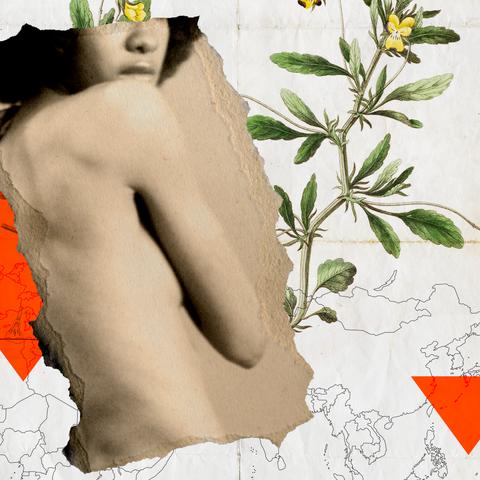 Arm, Botany, Plant, Flower, Illustration, Chest, Trunk, Art,